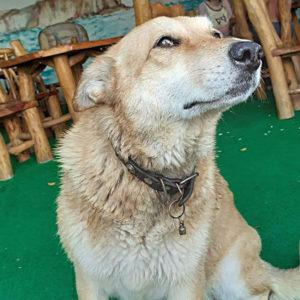 Где можно отдохнуть в Крыму с собакой?